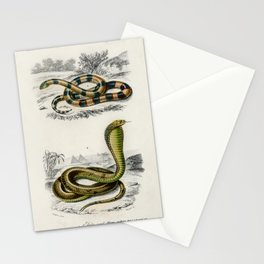Coral Snake (Elaps Corallinus) and Egyptian Cobra (Naja Hoje) illustrated by Charles Dessalines D Or Stationery Cards