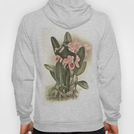 Botanical Boy Hoody