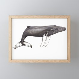 Humpback whale Megaptera Framed Mini Art Print