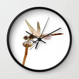 Dragonfly Resting On Seed Head Isolated Wall Clock