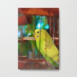 A feathery friend Metal Print