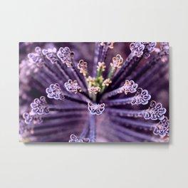 Purple Euphorbia in Detail Metal Print