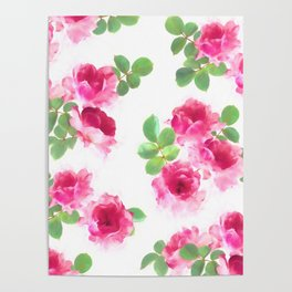 Raspberry Pink Painted Roses on White Poster