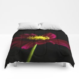 Elegance of a Cosmo Comforters