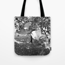 Sunlight in Black and White Tote Bag
