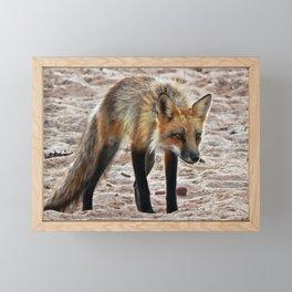 Foxy Fox on the Beach Framed Mini Art Print