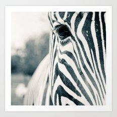 Zebra Face Black & White Art Print