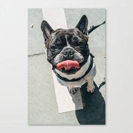 Dawg Canvas Print