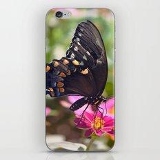 Spicebush Swallowtail iPhone & iPod Skin