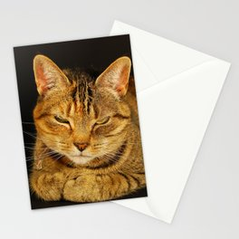 Cat 1 Stationery Cards