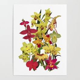 Orchids - Hot Colors! On white Poster