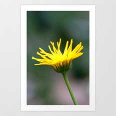 mature flower Art Print