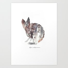 Lepus Californicus Art Print