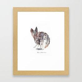 Lepus Californicus Framed Art Print