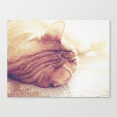 Lazy Day Canvas Print