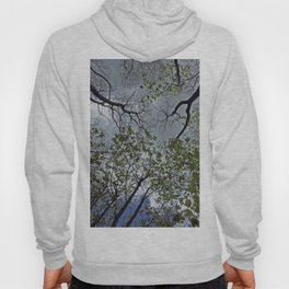 Tree canopy in the spring Hoody