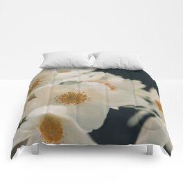 Anemone On Black Comforters