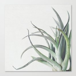 Air Plant II Canvas Print