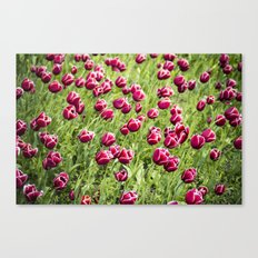 Tulips will remember  Canvas Print