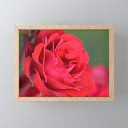 Blooming Roses Framed Mini Art Print