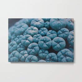 Blue Pumpkins (Color) Metal Print