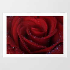 Beauty Is A Red Rose Art Print