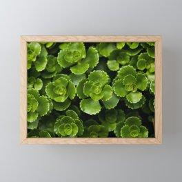 Green Succulent Leaves Framed Mini Art Print