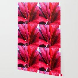 Red Ti Leaf Wallpaper