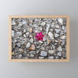 Pink Flower on Pebble Pavement Framed Mini Art Print