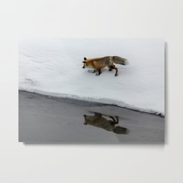 Carol M. Highsmith - Hunting Fox Metal Print