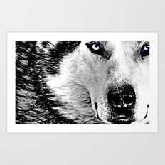 Blue eyed wolf Art Print