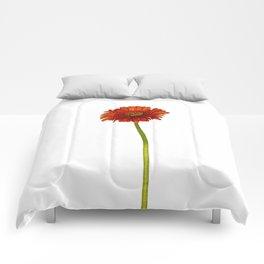 Gerbera Comforters