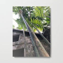 Tall Caribbean Bamboo Next to An Abandoned House Metal Print