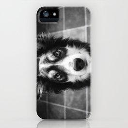 Tri-coloured border collie. iPhone Case