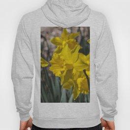Daffodils 2 Hoody