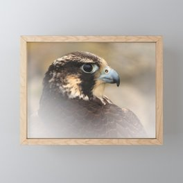 Vignetted Profile of a Peregrine Falcon Framed Mini Art Print