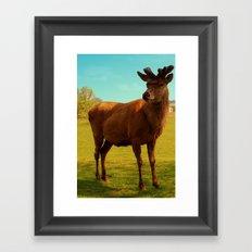 Young Deer (Cervidae) Framed Art Print