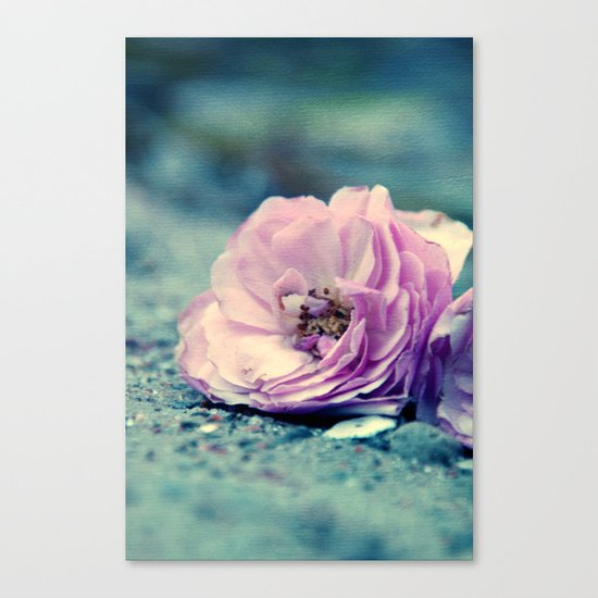 rose on beach Canvas Print