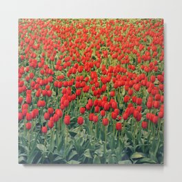 Tulips field #2 Metal Print