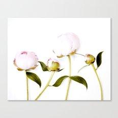 Peony Bulbs Canvas Print