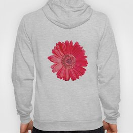 isolated red gerbera daisy on white Hoody