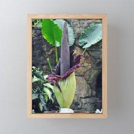 Amorphophallus Titanum Framed Mini Art Print