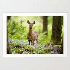 Roe Deer in a Bluebell Wood Art Print