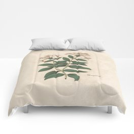 The Fragrant Honeysuckle Comforters
