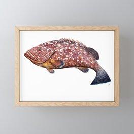 Dusky grouper or merou Framed Mini Art Print