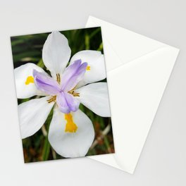 White and Lavender Flower Stationery Cards