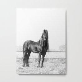 Dark Horse, Black and White Nature Photography Metal Print