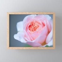 Forever in Love - Pink Rose #1 #decor #art #society6 Framed Mini Art Print