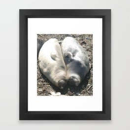seal love Framed Art Print
