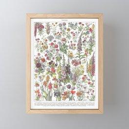 Fleurs Collection I Framed Mini Art Print